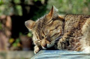 аппатия кота