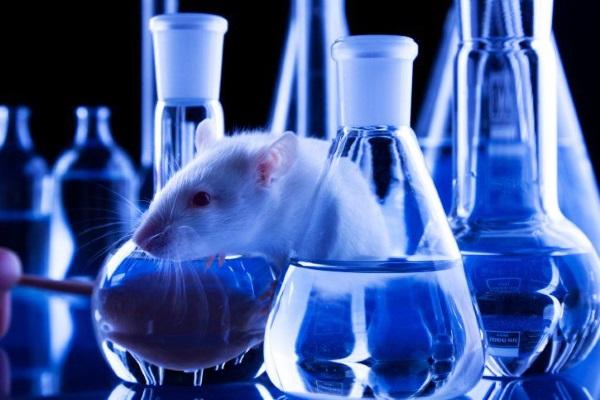 Исследование токсичности озокерита проводилось на лабораторных крысах