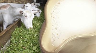 Можно ли очистить легкие курильщика молоком? Польза козьего и коровьего продукта