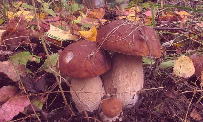 Сбалансированная диета подразумевает исключение грибов в любом виде