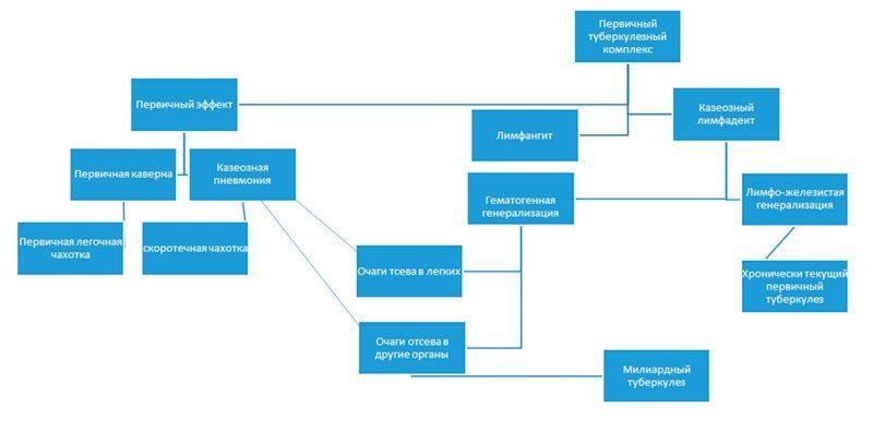 Схема первичного туберкулезного комплекса
