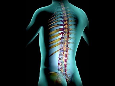 Хондроз грудного отдела позвоночника (грудной): симптомы ...