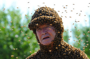 пчёлы облепили человека