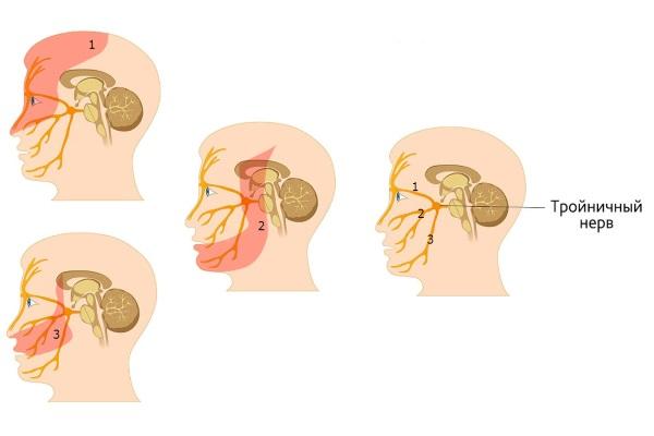 Зоны иннервации тройничного нерва