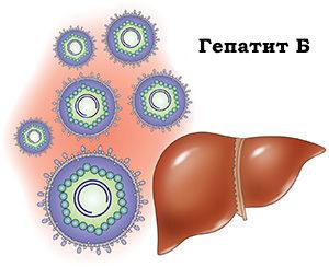 рисунок печени человека и вируса гепатита B