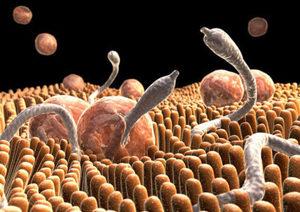 паразиты и микроорганизмы рисунок