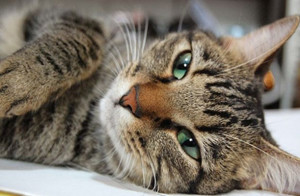 отравление котов