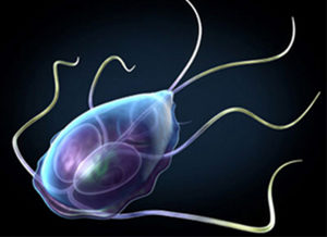 лямблиоз паразит фото
