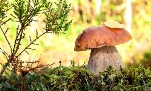 Несмотря на то что грибы отличаются хорошими диетическими качествами и не содержат жиров, специалисты рекомендуют больным полностью отказаться от этого продукта