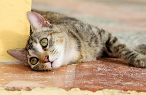отравление котов крысиным ядом