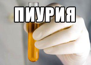 как лечить пиурию