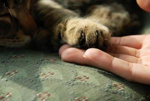 отравление у котов