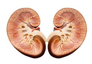 пиелоэктазия почек у грудничка