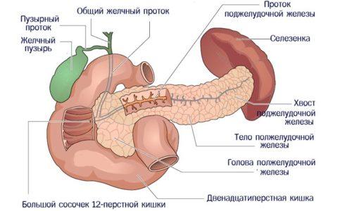 При остром процессе наблюдается воспалительный процесс либо в отдельной части железы, например, в хвосте или теле, либо во всем органе