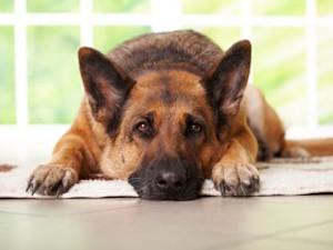 питание собаки при отравлении
