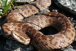разновидности змей
