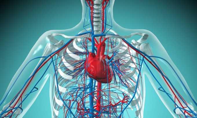 При сердечно-сосудистых заболеваниях не следует употреблять прополис
