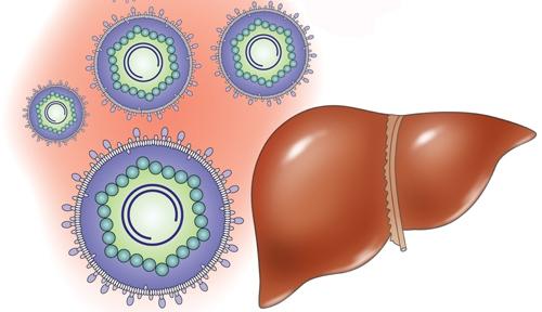 из-за влияния на печень химических веществ развивается токсический гепатит