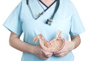 модель желудка в руках у врача