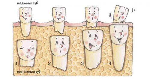 Когда ждать первые потери? Молочные зубы у детей схема выпадения