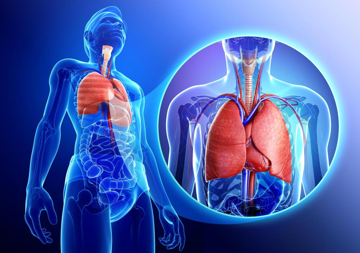 """""""Кровавые легкие"""": что такое гемосидероз легких?"""
